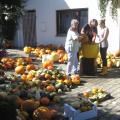 Kuerbisernte-September-2011-028