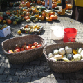Kuerbisernte-September-2011-029