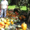 Kuerbisernte-September-2011-037