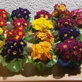 Blumengeschenk1